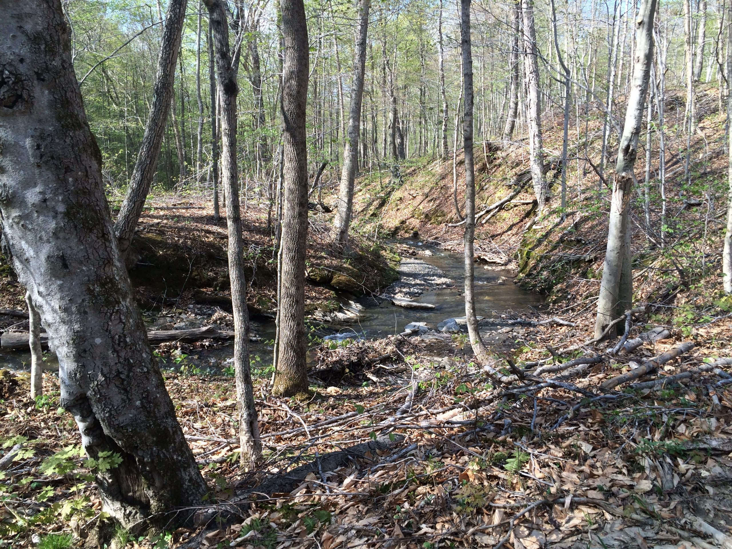 The forrest and the stream